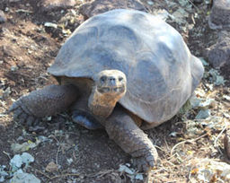 Students Explore Galapagos Islands During March Break